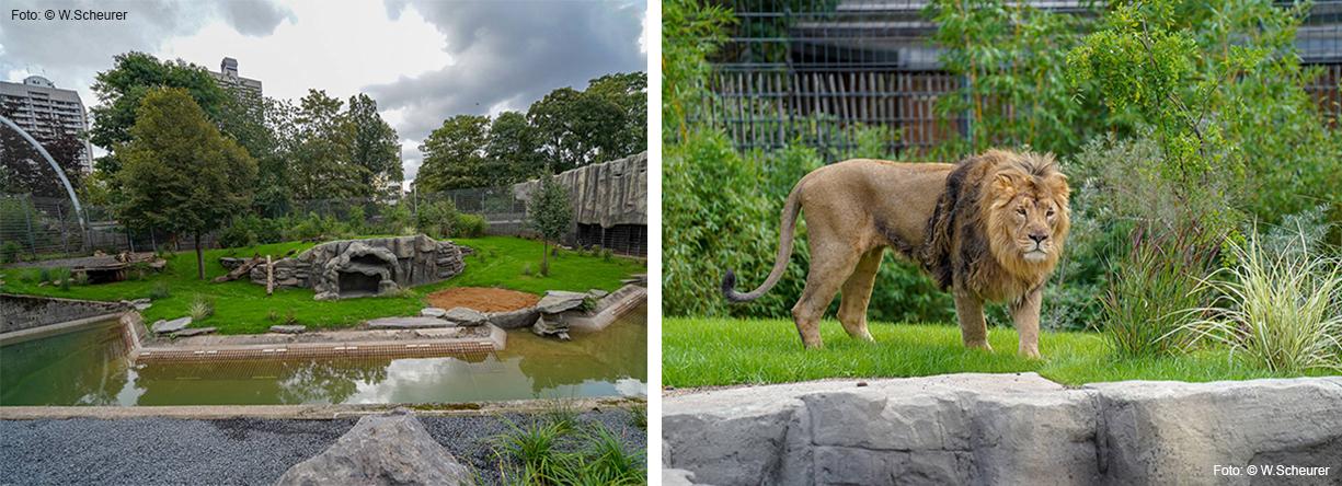 Beheizbare Liegefläche für Löwenpaar